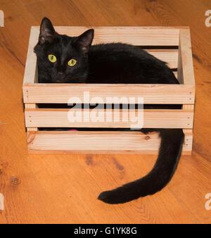 Schwarze Katze spielen und verstecken sich in einer Holzkiste, Blick auf den Betrachter - Stockfoto