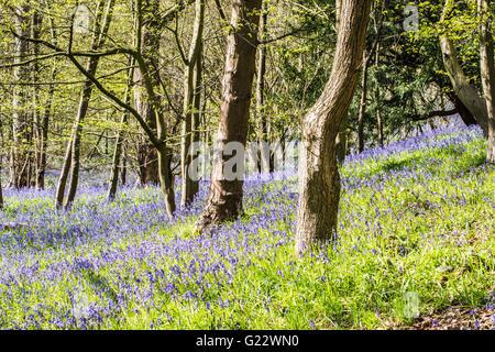 die Farbe Blau im Frühling Ray Boswell - Stockfoto