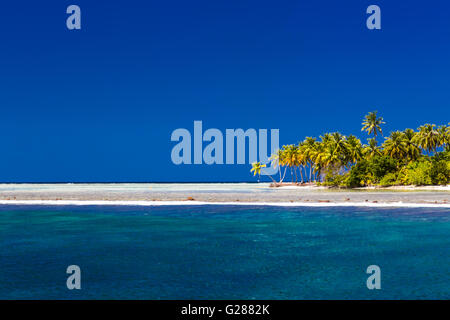 Tropischer Traumstrand auf den Malediven mit einigen Palmen und die blaue Lagune - Stockfoto