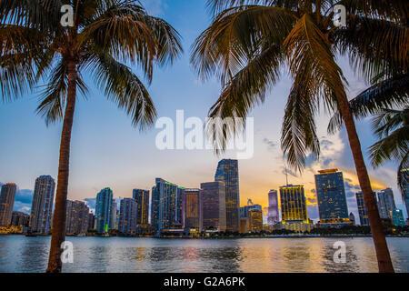 Blick auf schöne Miami Florida-Skyline bei Nacht durch Palmen gesehen - Stockfoto