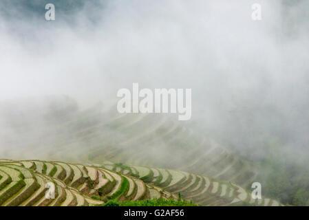 Wassergefüllten Reisterrassen im Morgennebel im Gebirge, Longsheng, Provinz Guangxi, China - Stockfoto