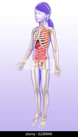 Menschliche Leber Struktur. Die internen Organ Symbole gesetzt ...