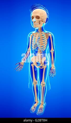 Skelett-Systems eines Kindes, Abbildung Stockfoto, Bild: 104752056 ...