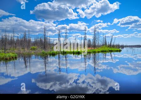 Wolken spiegeln sich in der ein Feuchtgebiet von den borealen Wald Yellowknife Highway in den Northwest Territories - Stockfoto