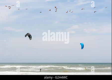 Pelikane und Kitesurfer teilen sich den Himmel am Strand von St. Augustine in Nordflorida. (USA) - Stockfoto
