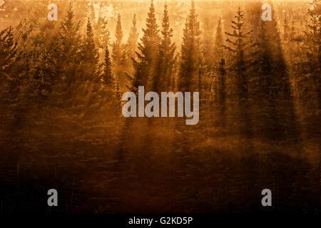 Bäume-Hintergrundbeleuchtung von Morgensonne wirft starke Schatten Kenora Ontario Kanada - Stockfoto