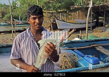 Traditionelle Fischer von Siridao Beach, Goa, Indien, zeigt frisch Hai Fisch gefangen. - Stockfoto
