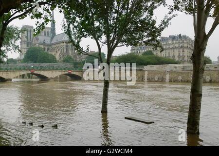 Paris, Frankreich. 3. Juni 2016. Paris, Frankreich. 3. Juni 2016. Die Cité Insel auf die angeschwollenen Fluss im - Stockfoto