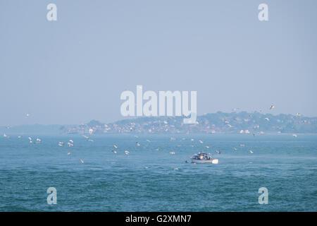 Ein kleines Boot, umgeben von Möwen Angeln im Solent. Blick aufs Meer auf der Isle Of Wight kann in der Ferne gesehen - Stockfoto