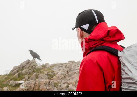 Hillwalker hält um ein freundlicher Rabe (Corvus Corax) auf dem Gipfel des Stob Dearg, Glen Coe, Schottland, Vereinigtes - Stockfoto