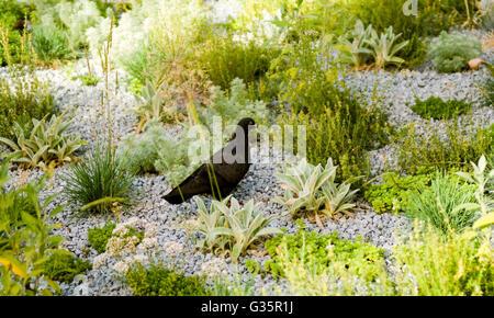 Taube im Garten - Stockfoto