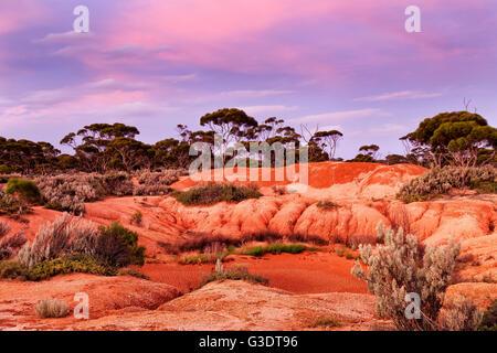 roter erde des westaustralischen outback bei sonnenuntergang mit rosa himmel und trocken rissig. Black Bedroom Furniture Sets. Home Design Ideas