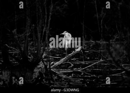 Einsamer Dämmerungsvogel auf einem Ast - Stockfoto