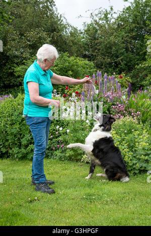 Reife Frau training ihr Border Collie im Garten im Sommer. - Stockfoto