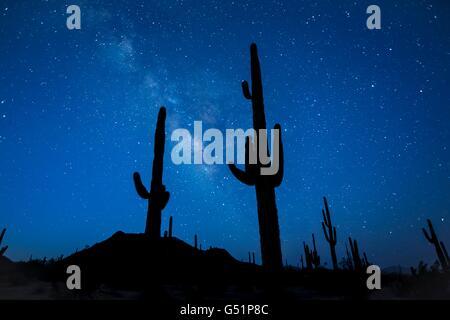 Sterne und die Milchstraße über Saguaro-Kaktus in der Sonora Wüste National Monument in der Nähe von Gila Bend, - Stockfoto