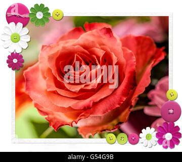 Rote rose blüht in einem Bouquet unscharfen Hintergrund gesetzt. Eine strukturierte und digital bearbeiteten Foto - Stockfoto
