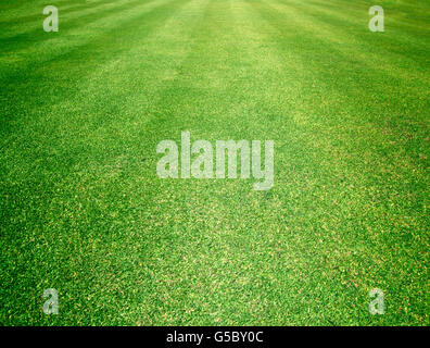 Golfplätze grünen Rasen Muster strukturierten Hintergrund.