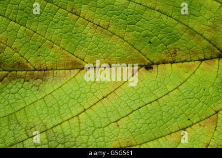 Eine Nahaufnahme-Blatt-Textur - Stockfoto