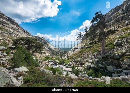 Berglandschaft in Golo Tal, Natur Naturpark von Korsika, Parc Naturel Régional de Corse, Korsika, Frankreich - Stockfoto