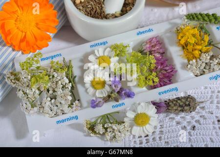 Tägliche Pille Box und heilende Pflanzen - Stockfoto