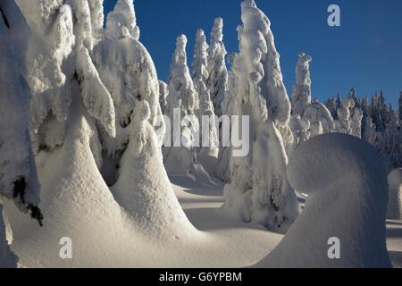 WA12879-00... WASHINGTON - verputzt Schnee Bäumen nahe dem Gipfel des Berges Paintballanlage in Okanogan-Wenatchee - Stockfoto