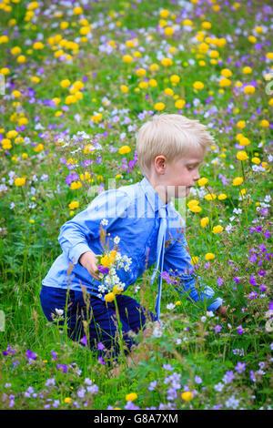 Junge mit Krawatte Biegen bis Pick Blumen auf einer Wiese gefüllt mit verschiedenen farbigen Blumen, ein Bündel - Stockfoto