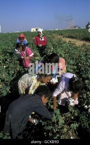Kinder verdienen Baumwolle auf einer Baumwollplantage nahe der Stadt von Aleppo in Syrien im Nahen Osten - Stockfoto