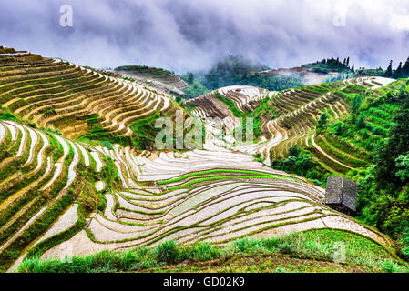 YAOSHAN Berg, Guilin, China Hang Reis Terrassen Landschaft. - Stockfoto
