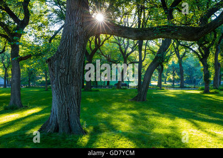 Bäume im Central Park in New York City - Stockfoto