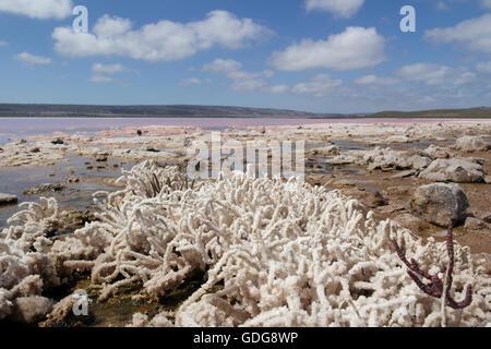 Pink Lake in der Nähe von Port Gregory in Western Australia - Australien - Stockfoto