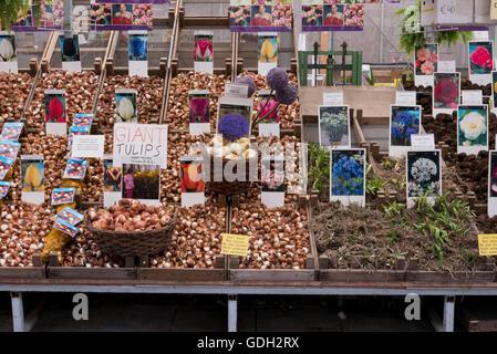 Tulpenzwiebeln auf dem traditionellen blumenmarkt for Lampen niederlande