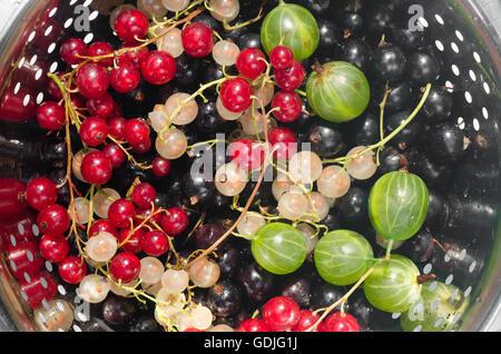 gemischte Johannisbeere Beeren im Sieb - Stockfoto