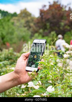 Columbus, Ohio, USA, 21. Juli 2016: Nahaufnahme einer Hand spielen Pokemon gehen im Park von Rosen. pokemon Go ist - Stockfoto
