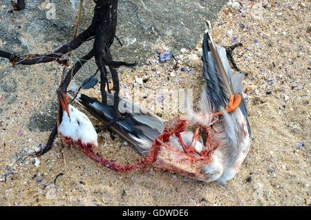 Tote Möwe verheddert in Algen und Angelschnur am Strand - Stockfoto