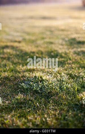 Tautropfen auf dem Rasen im Feld bei Sonnenaufgang, Renesse, Schouwen-Duiveland, Zeeland, Niederlande - Stockfoto