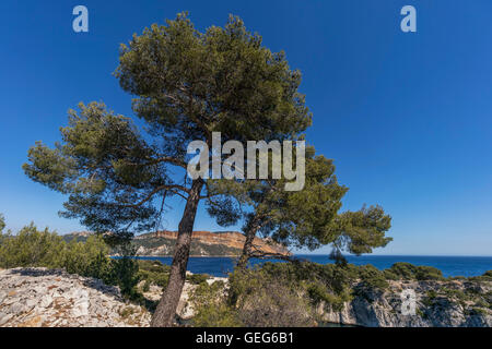 Port-Miou, Calanques, Cliff, Cassis, Provence, Frankreich - Stockfoto