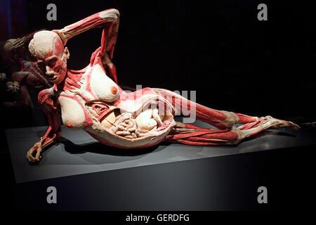 Körperwelten Schwangere Frau