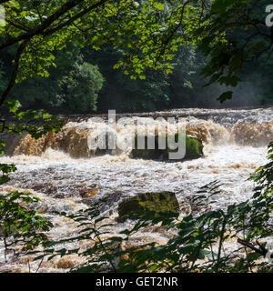 Das schöne obere Aysgarth fällt auf den Fluß Ure in Wensleydale Yorkshire Dales National Park England Vereinigtes - Stockfoto