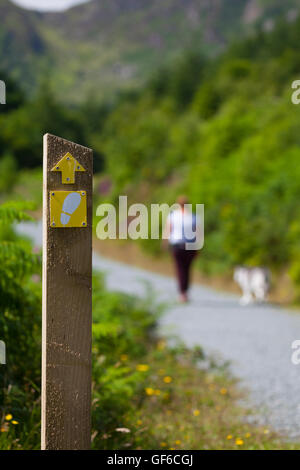 Hündin Walker walking Hunde auf dem Weg der umgibt Llyn oder See Crafnant in Snowdonia National Park. Wales, Großbritannien - Stockfoto