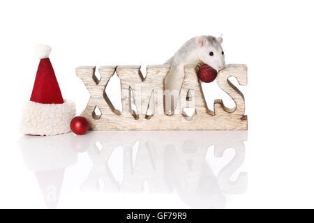 ausgefallene Ratte zu Weihnachten - Stockfoto