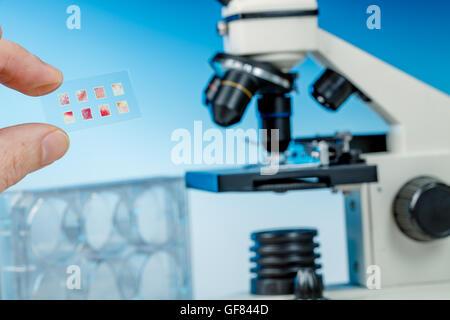 Medizinisches Labor, Wissenschaftler Hände mit Mikroskop. - Stockfoto