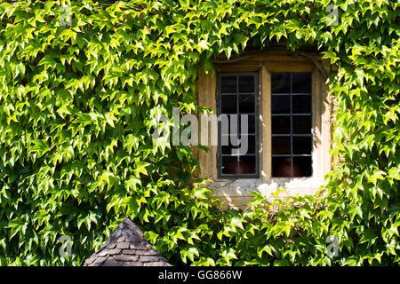 Ein Fenster und Wand von einem alten Steinhaus umgeben und in die grünen Blätter einer schleichenden oder klettern - Stockfoto