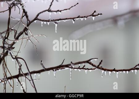 Eiszapfen am Ast im Dezember - Stockfoto