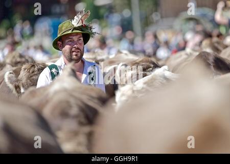 Mann in traditioneller Kleidung, Viehscheid, Allgäu, Bayern, Deutschland - Stockfoto