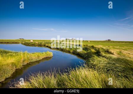 Salzwiesen und Wohnung Hügel, Hallig Langeness, Nordfriesischen Inseln, Schleswig-Holstein, Deutschland - Stockfoto