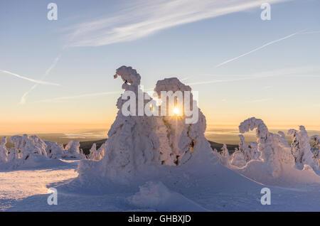 Geographie/Reisen, Deutschland, Sachsen-Anhalt, Harz National Park, schneebedeckten Fichten auf dem Schnappen zu - Stockfoto