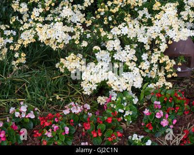 Blumen in Atlanta ist die Hauptstadt und die bevölkerungsreichste Stadt im Bundesstaat Georgia Vereinigten Staaten - Stockfoto