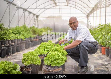 Porträt des Managers in Hydrokultur Bauernhof in Nevis, West Indies - Stockfoto