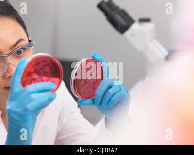 Wissenschaftler untersuchen mikrobiologische Kulturen in einer Petrischale - Stockfoto