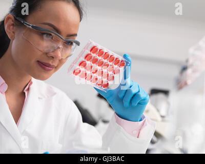 Wissenschaftlerin Zellkulturen in Multi gut Fach im Labor untersuchen - Stockfoto